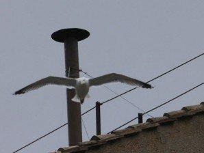 vatican seagull