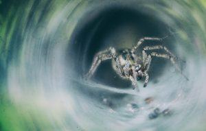 spider-4827708_1920